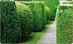 Grünanlagenpflege: DM Immobilienservice Hannover